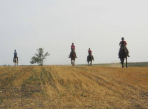 Horse back riding in the wheat fields